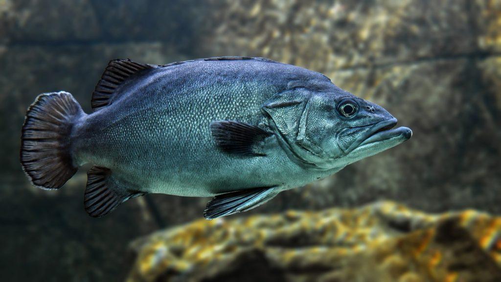fish 魚