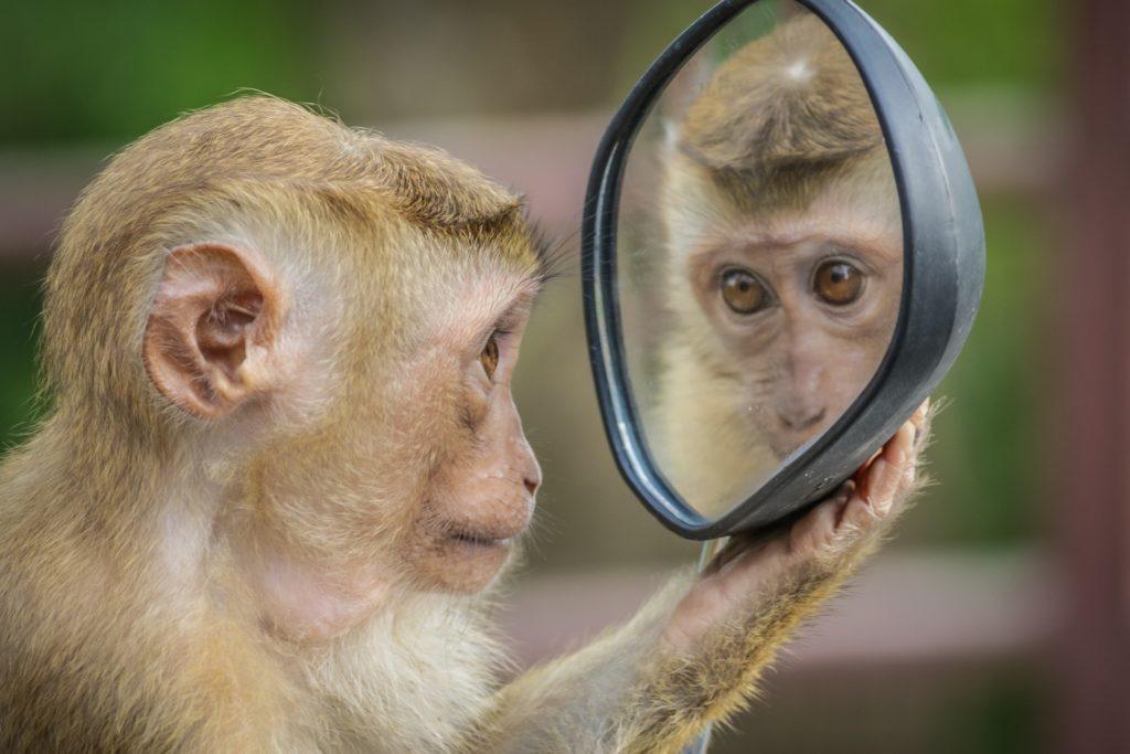 monkey サル