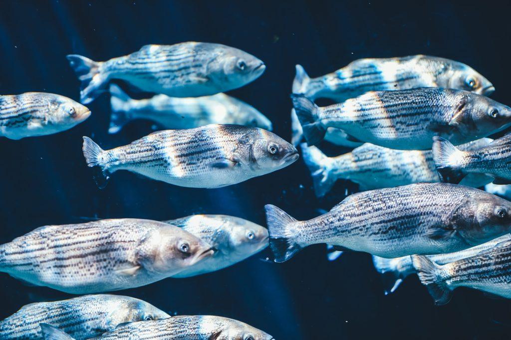 魚の群れ 英語