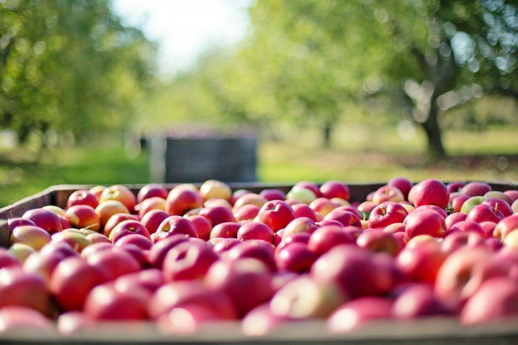 りんご 複数