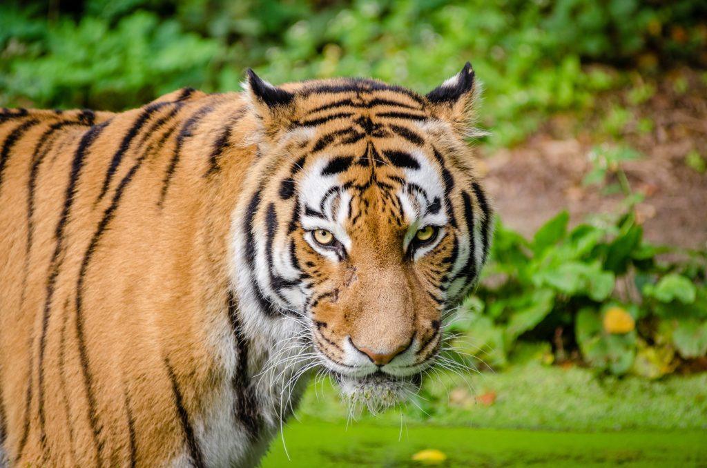 虎 赤ちゃん