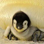 ペンギン 英語